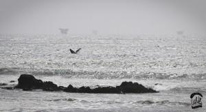 Pérou kite baleine